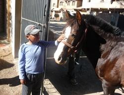 Caring for the horses