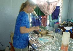 Work as a vet in Samoa